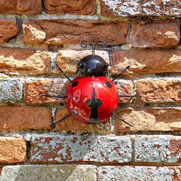 Large Ladybird on wall